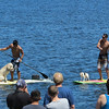 Cool dogs on the paddleboards