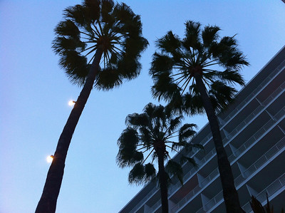 Palm trees or giant puff flowers?