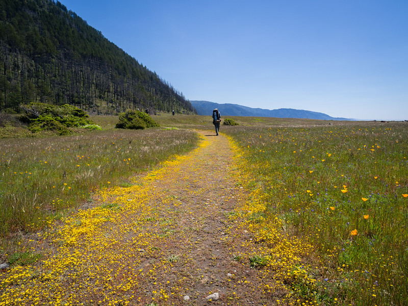 Path of yellow