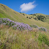 Pastoral hillsides