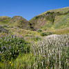 Reeds and lupine
