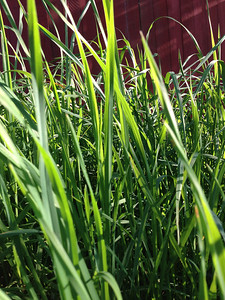 Grass. That is all.