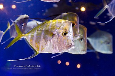 Newport Aquarium July 2013