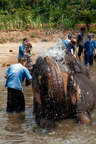 We spent a day at an elephant park, where elephants from around this area of the world are purchased from their less than ideal environments and given a home where mahouts care for them day in and day out, and visitors can come and learn the basics of the mahout trade.