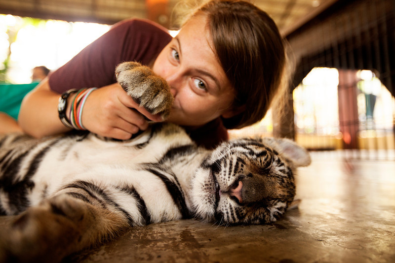 In Chiang Mai we visited the Tiger Kingdom, where we got the chance to cuddle up to giant jungle cats of all ages as most of them were busy doing what all kinds of cats do best - sleeping.