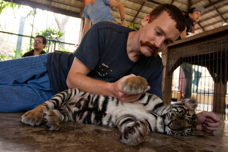 Well, Saturday found John and me at the Tiger Kingdom in Chiang Mai. It was intimidating, but amazing, as we lived every little kid's dream and petted tigers of all ages, while saying silent prayers to not be mauled.  We started with 'smallest' on the list of tigers (besides newborn.) They were teeny cute adorable sleeping creatures, unfazed by the attention. Evidently they sleep 15 hours a day at this age.