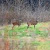 MET112613pfizer deer