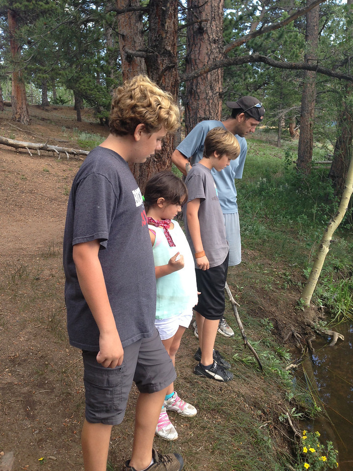 Looking at crawdads