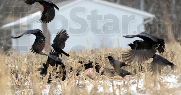 MET011212weather crows