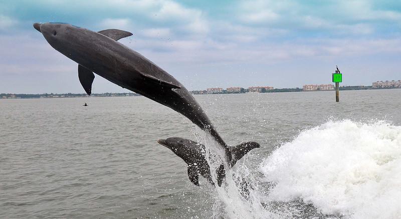Dolphin Cruise 04