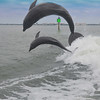 Dolphin Cruise 08