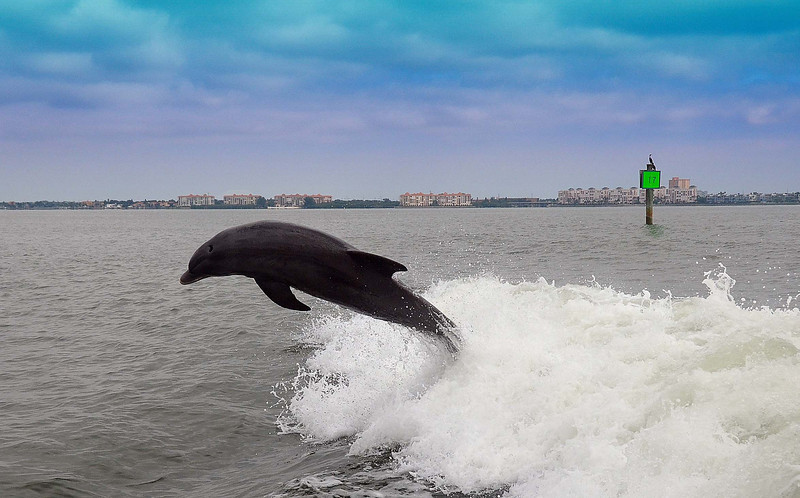 Dolphin Cruise 02