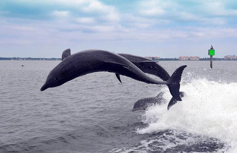 Dolphin Cruise 06