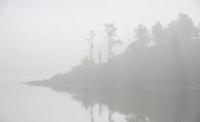 Foggy trees in a lagoon near Redwood National Park.