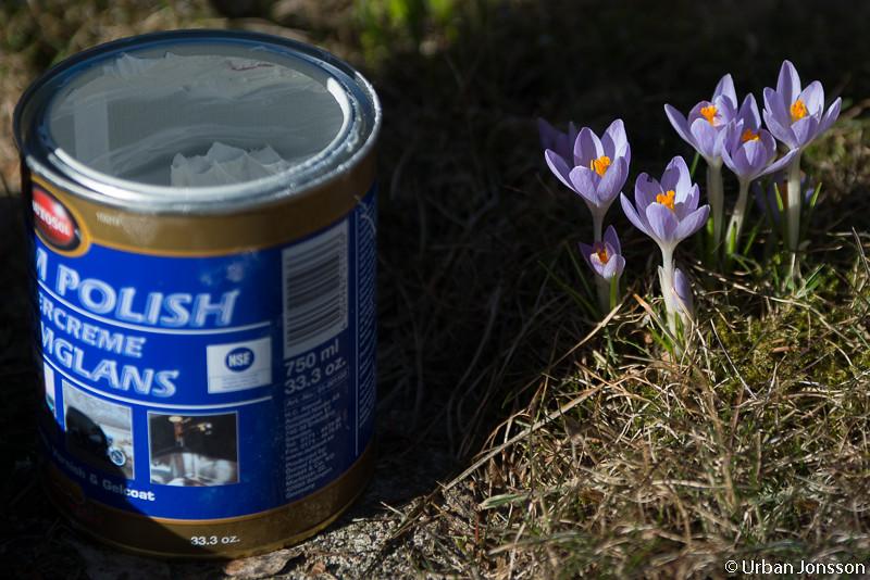 Där vid sidan av burken med polisch tittade våren fram.