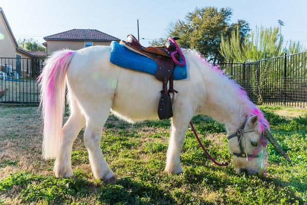 Kierras Pony Birthday