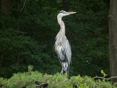 reservoir-wildlife