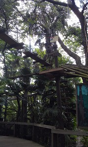 Canopy Walk at the Brevard Zoo