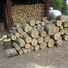 WOODPILE, WAITING FOR OUR SON-IN-LAW TO SHOW UP & SPLIT/STACK IT...WHITE ASH DOUG TOOK DOWN BETWEEN FISHING
