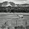 Orderville Horse
