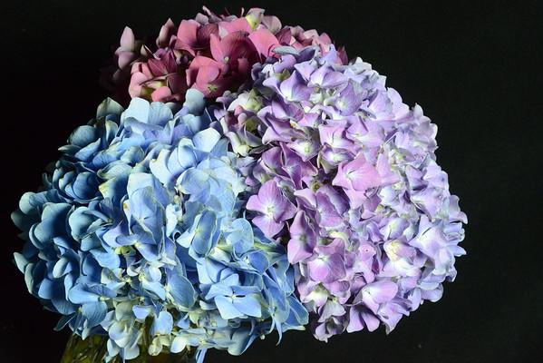 studio-flowers-mar12