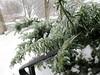 Daniel's photos of the ice storm