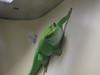 IMG_0538 g gecko