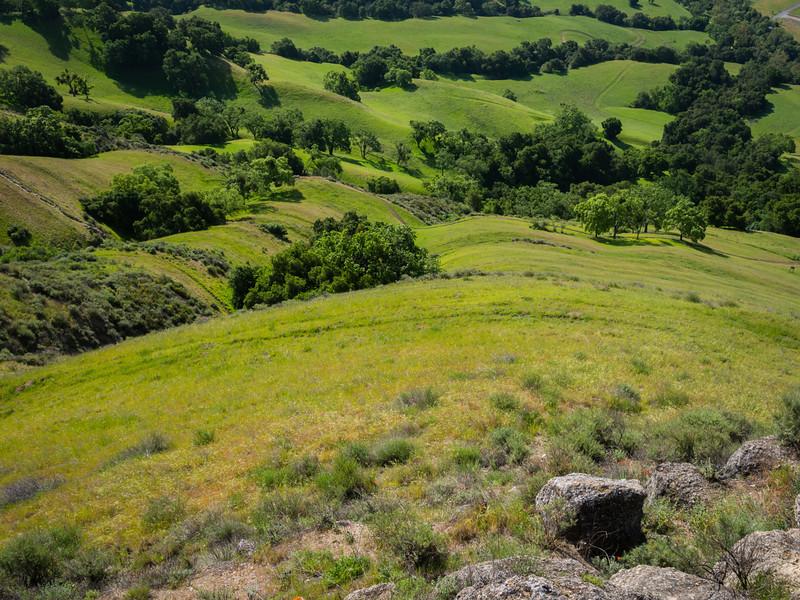 Green fields of California