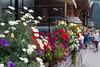 Flowers in Lauterbrunnen