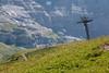 A flowered meadow on the trail, Kleine Scheidegg