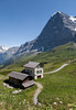 Eiger north face towering over meadows