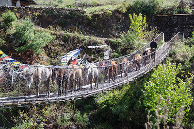 Horses on a bridge.  Notice that the herder is at the back.  These horses pretty much know what to do already.