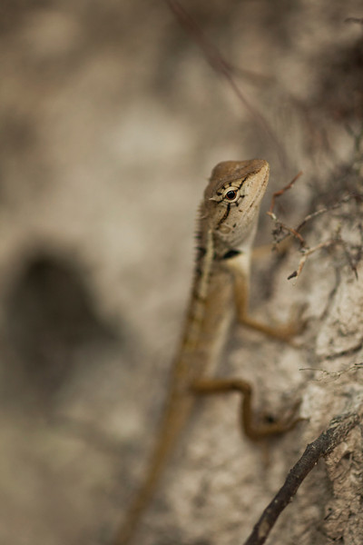 A lizard eyes the camera before darting away into the jungle.