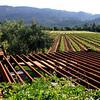 Trione vineyards