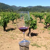 Wine in the Chase vineyard
