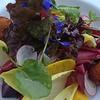 Delicious dinner at Barndiva in Healdsburg<br /> Heirloom Beets: Endive, Mandarin, Warm Chèvre Croquettes, Baby Radish, Spanish Sherry Vinaigrette