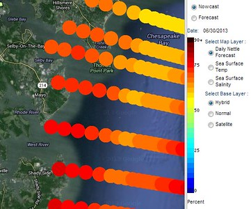 """The daily jellyfish forecast from NOAA -- the race was near """"Mayo"""" on the map"""