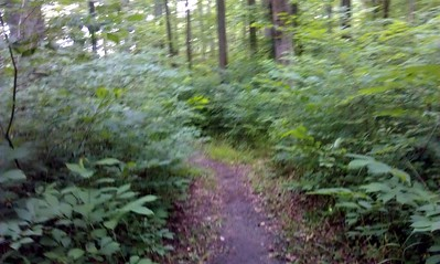 Typical section of the run course