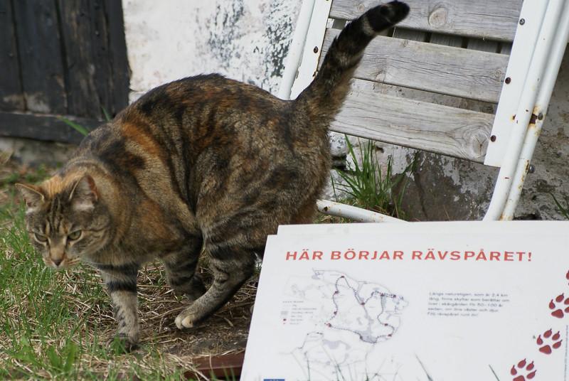Den sociala katten har fått upp ett spår...