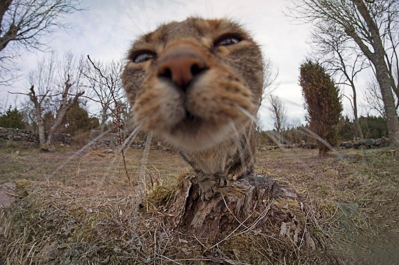 Katt av det mest nyfikna slaget.