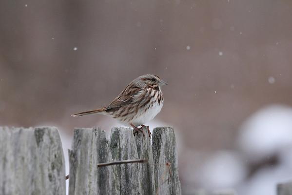Winter BackYard Birds