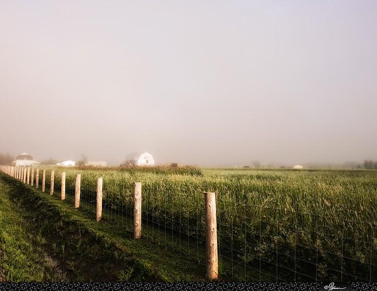 Fogday-14