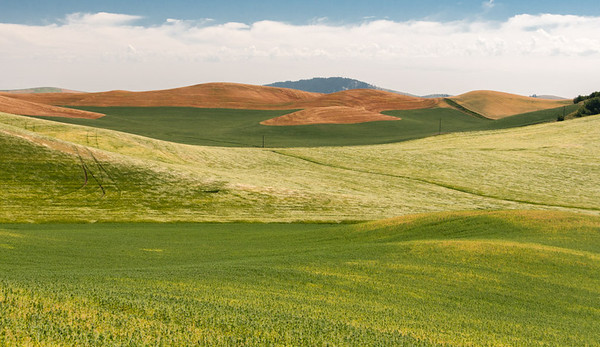 Palouse - Fields