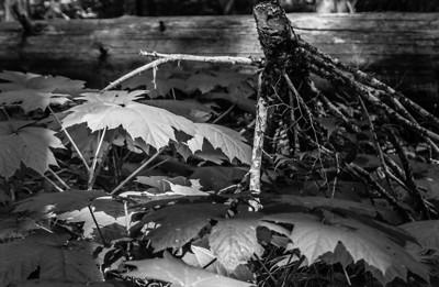 Settlers Cedar Grove