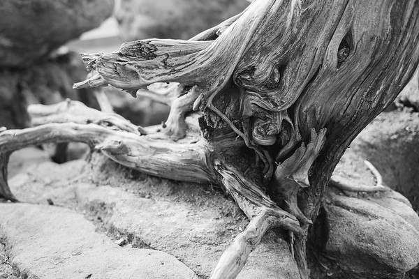 Old Roots