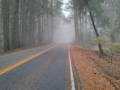 Cycling on Skyline Blvd, it's pretty, wet, and cold (about 42 F).