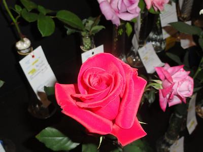 Dixie Classic Fair Flower Shows