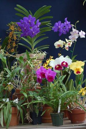 Garden Club Council Slideshow 2014
