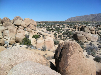 Mr. Faust: Joshua Tree National Park, California
