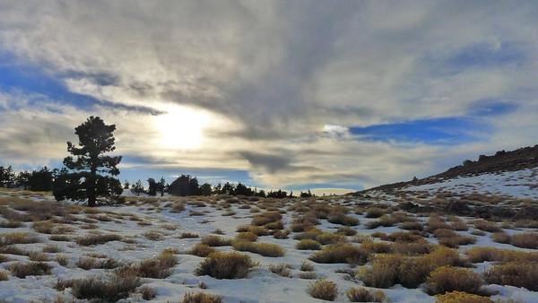 Mt. Pinos, Feb 2013